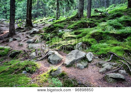 Mysterious forest with rocks and moss
