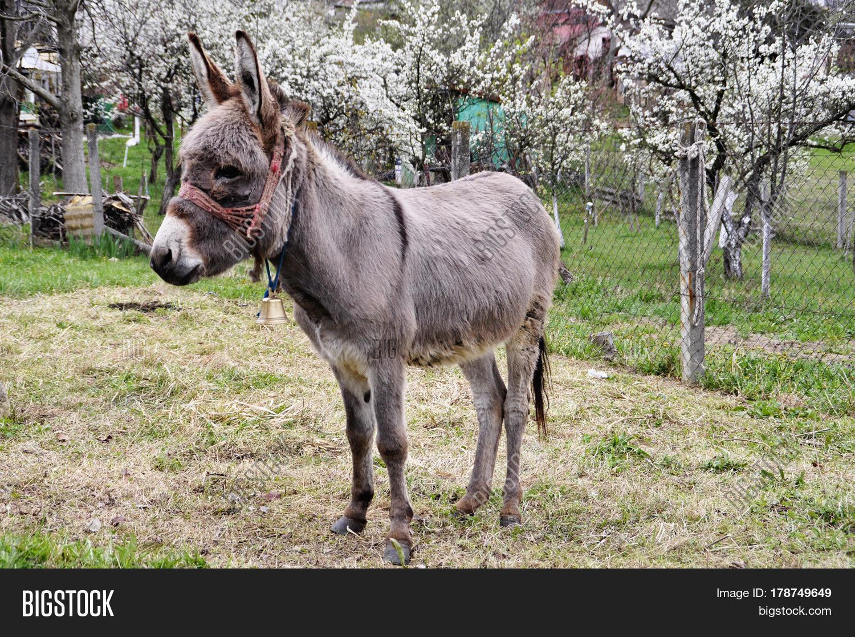Donkey Courtyard House Spring Image Photo Bigstock
