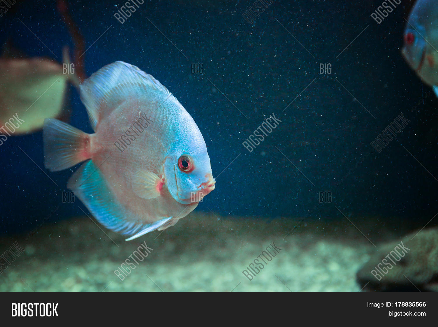 Exotic freshwater fish in aquarium stock photo stock for Rare freshwater aquarium fish