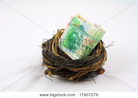 Hongkong dollor in nest