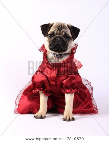 Lady Mops In Red Dress