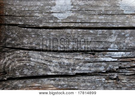 Decayed wood tissue