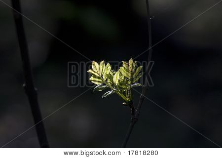 green leaf with spot light in forest in detail
