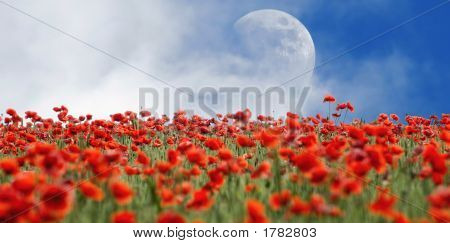 Poppies And Moon
