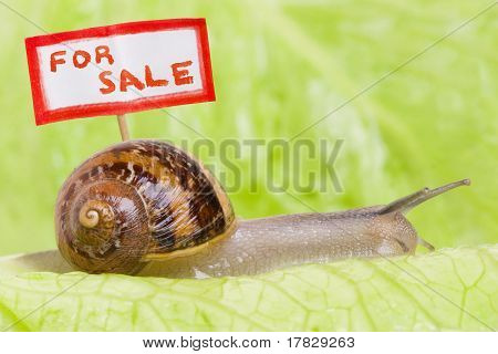 Snail Moving House