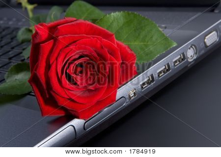 Rose On Laptop