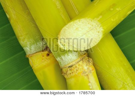 Tropical Raw Sugar Cane