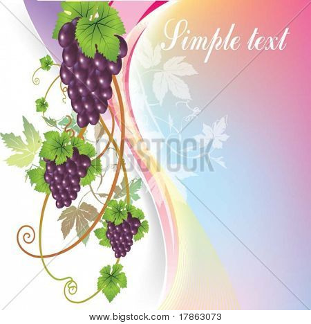 vector vine on a white background
