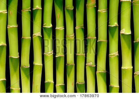 Bamboo Stem Background