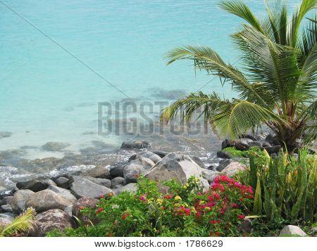 Grand Case Bay Palm