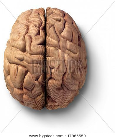 Wood sculpture of a brain made from oregon pine