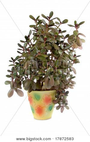 Potted Plant  In A Pot