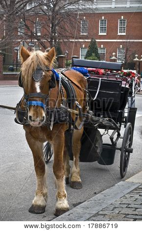 Horse and Carriage Philadelphia