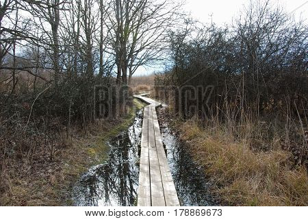 Wooden footpath in a wetland by spring season