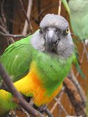 picture of polly  - Green - JPG
