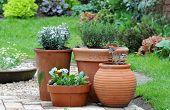 stock photo of english cottage garden  - pretty garden features in an english cottage garden - JPG