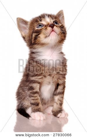 Kitty look up [with clipping path]
