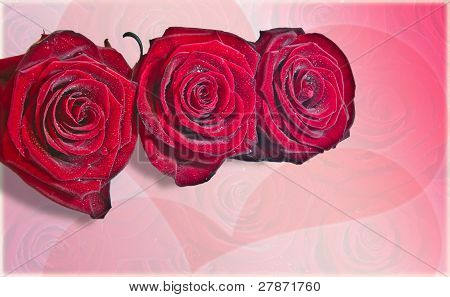 Roses red with dew against hearts on the background
