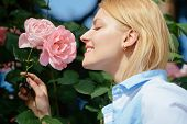 I Love Roses. Young Woman At Flowering Rose Shrub. Pretty Woman Smell Rose Flowers In Summer Garden. poster
