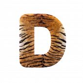 Tiger letter D - Uppercase 3d Feline fur font isolated on white background. This alphabet is perfect poster