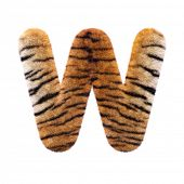 Tiger letter W - Uppercase 3d Feline fur font isolated on white background. This alphabet is perfect poster