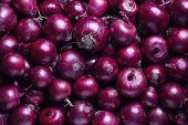 Full Frame Shot Of Purple Onions. Fresh purple onions as a background.  poster