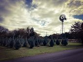 Little Christmas Trees Growing On A Farm With A Windmill And A Dirt Road poster