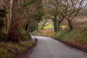 Narrow Road Among The Hills In Devon. Classic View Of A Road With Overhanging Trees. Winter. Devon poster