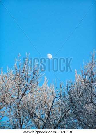 The Moon In The Clean Blue Sky