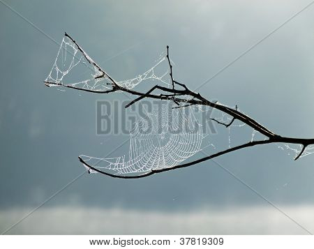 Oh What Tangled Webs We Weave