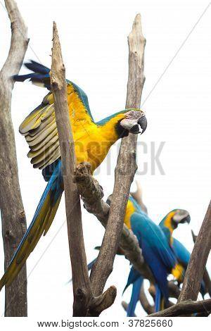 Falando papagaio