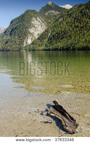 Dead Wood In The Mountain Lake K�nigssee
