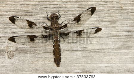 Dragonfly On Wooden Bench