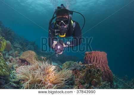 diver and a healthy reef