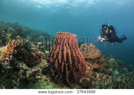 diver with a red barrel sponge