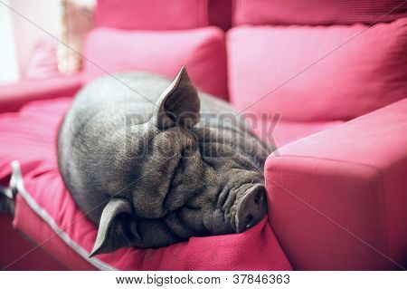 Black Piggy On Sofa