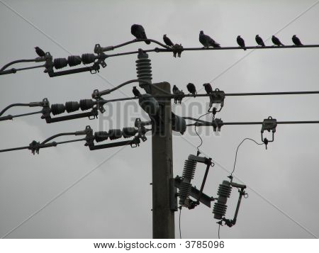 birds in the wire electricity bird in