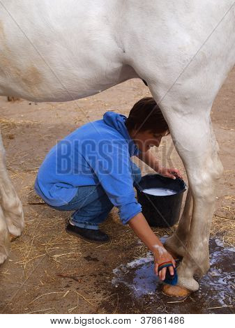 The Girl Washes A Horse