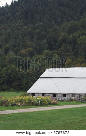 Old Barn With Flowers