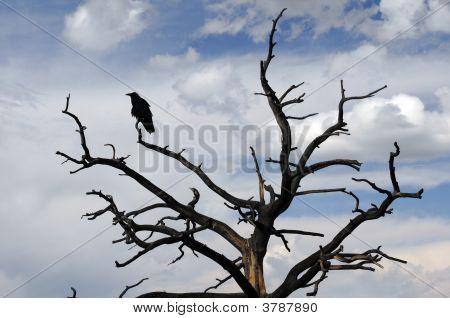 Raven en árbol Stark