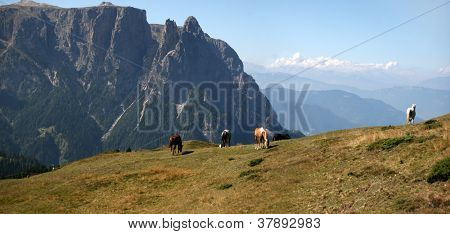 Wild Horses Grazing in the Dolomite Mountains