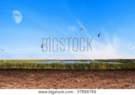 Dry Soil Landscape
