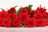 stock photo of red rose  - bunch of red roses on white background - JPG