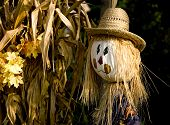image of corn stalk  - Fall or autumn decoration including two happy scarecrows and dried corn stalks - JPG