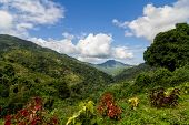 stock photo of jamaican  - Overlooking a valley in the Blue Mountains of Jamaica  - JPG