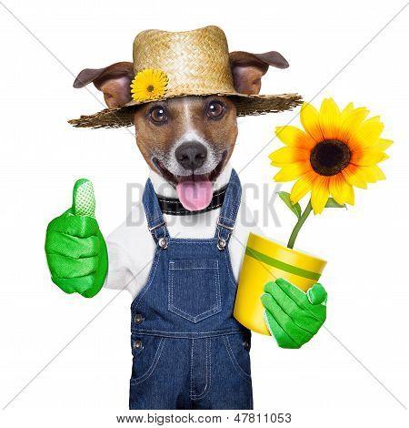 Gardener Dog
