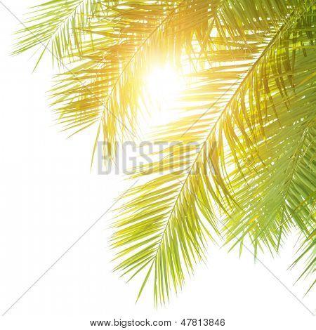Closeup en Palma verde hojas frontera aislado sobre fondo blanco tímido, follaje de árboles exóticos frescos, par