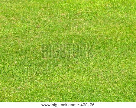 Gras Detail