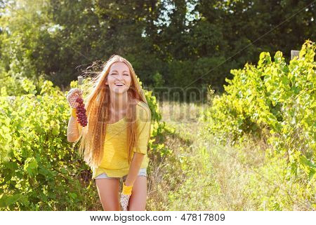 Woman Winegrower Picking Grapes At Harvest Time