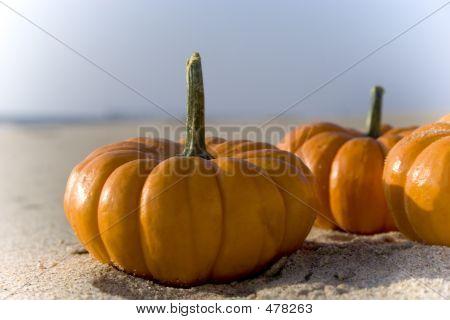 Halloween Mini Pumpkins